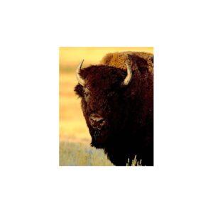 essenza-singola-wild-earth-buffalo-bufalo-30-ml